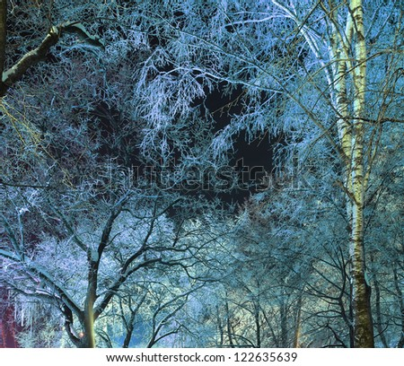 sky through the branches in a night winter forest, branches covered with hoarfrost
