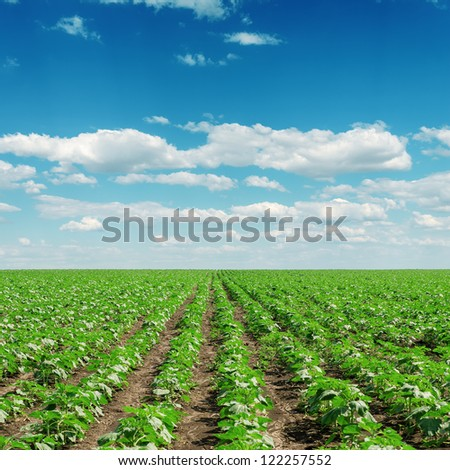 sky with clouds and field with little sunflowers