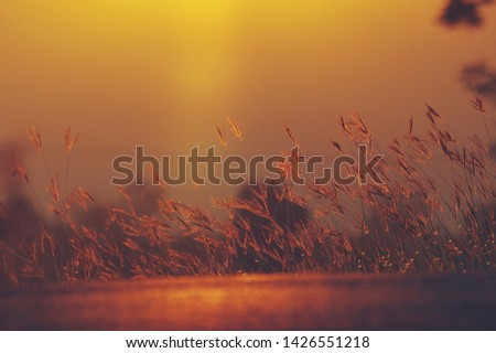 Sky with clouds during sunset,Sunset with silhouette of grass flower. #1426551218