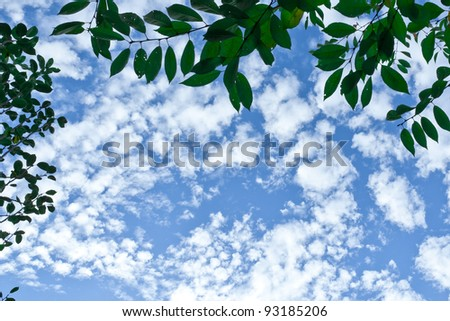 Sky with fluffy clouds above you framed by tree branches.