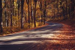 Skyline Drive in Gold, Shenandoah National Park