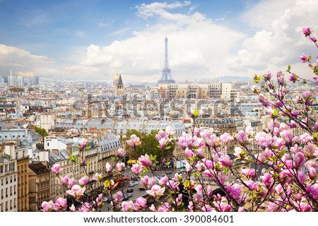 skyline of Paris city roofs with Eiffel Tower  with blooming magnolia spring tree, France