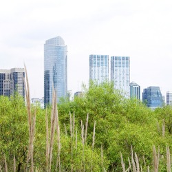 skyscraper skyline from the park