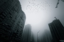 Skyscrapers at early foggy morning in the city district. Flock of birds flying over.