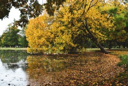 Slant autumn tree; nature background.