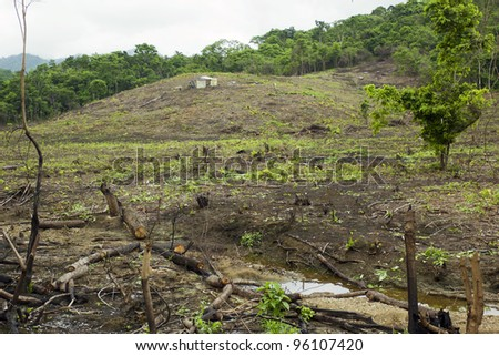 Slash and burn cultivation in tropical rainforest on the Pacific coast of Ecuador - stock photo