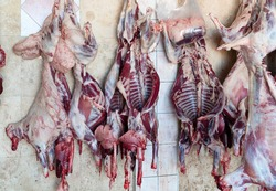 Slaughter house with appliance and slaughtering animal.