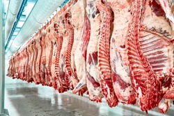 Slaughterhouse meat processing plant, cut marble beef.