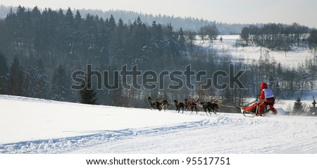 Sled dog. Musher and dogs in Pasterka small village in Table Mountains - Poland