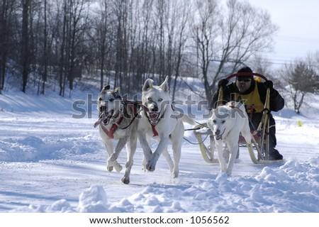 Sled Dog Race 14