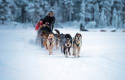 sledding with husky dogs in lNorway .Tromso