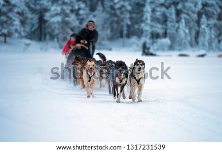 sledding with husky dogs in lNorway .Tromso Stock photo ©