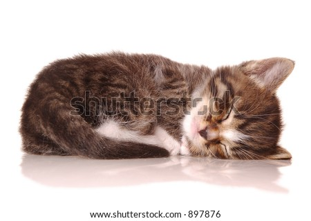 sleep kitty