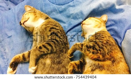 Stock Photo Sleep two cats in similar gesture