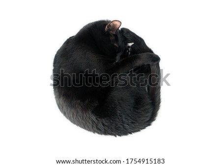 Sleeping black cat rolled up like a circle Stockfoto ©