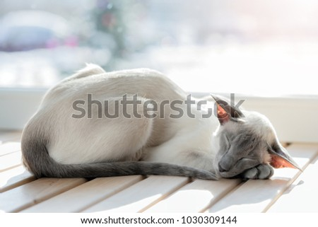 Sleeping cat. Breed oriental cat. #1030309144