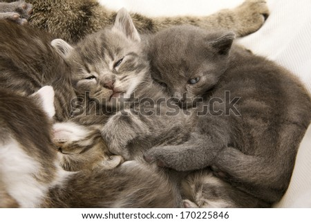 sleeping cat children, a heap of cat is cuddly babies on their mother