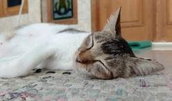 Sleeping Cat in front of House