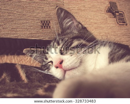 sleeping cat,  in the foreground blurred cat\'s paw; vintage filter effect