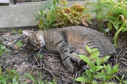 Sleeping cat in the garden