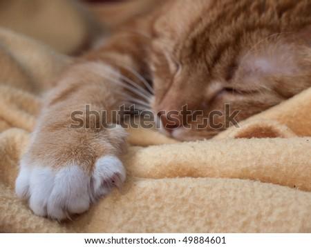 Sleeping cat on blanket