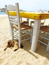 Sleeping cat on sandy beach in Mykonos, with tables and chairs near the blue sea, beach restaurant with greek cat on Mykonos , Greek Islands
