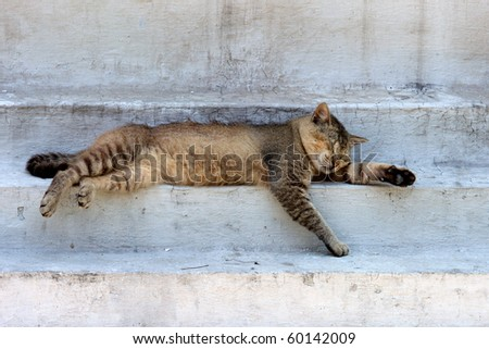 sleeping cat on stupa, Sikkim, India
