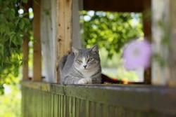Sleeping cat on the terrace