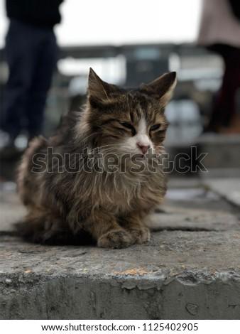 Sleeping cat outside - Shutterstock ID 1125402905