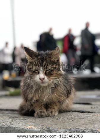 Sleeping cat outside - Shutterstock ID 1125402908