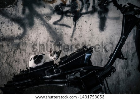 Sleeping cat over an obsolete motorcycle. #1431753053