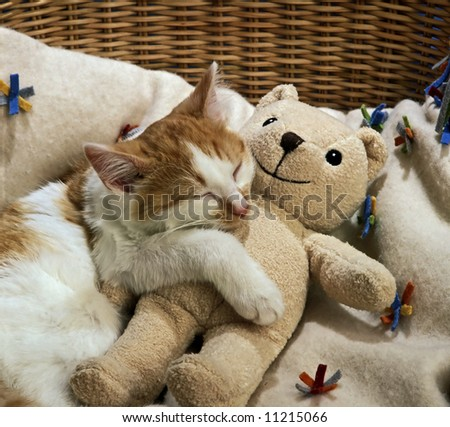 sleeping cat with a doll - stock photo