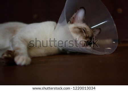 sleeping cat with Elizabeth collar (e-collar) #1220013034