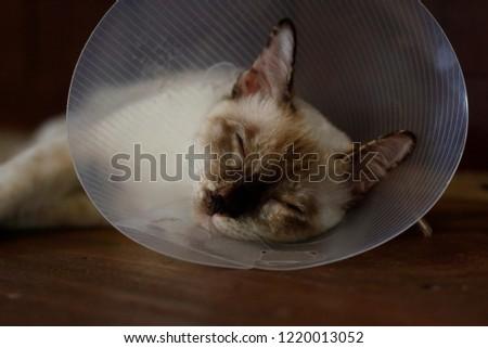sleeping cat with Elizabeth collar (e-collar) #1220013052