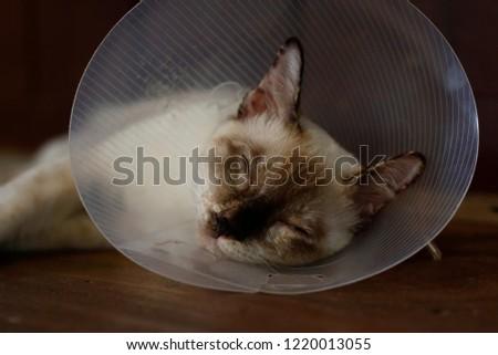 sleeping cat with Elizabeth collar (e-collar) #1220013055