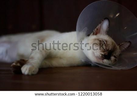 sleeping cat with Elizabeth collar (e-collar) #1220013058