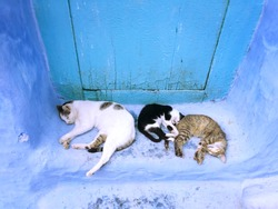 sleeping cats in the blue