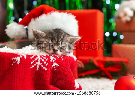 Sleeping Christmas Cat. Beautiful little tabby sleeping kitten, kitty, cat in red Santa Claus hat near Christmas gift boxes and chrismas tree. Happy New Year animal, pet.