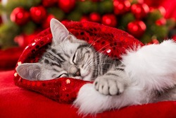 Sleeping christmas kitten