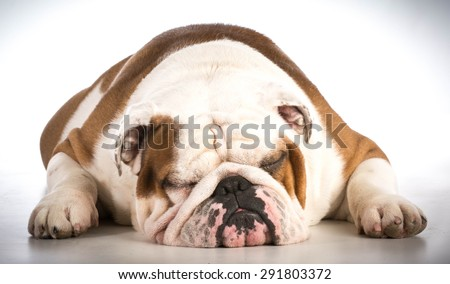 sleeping dog - bulldog male 6 years old