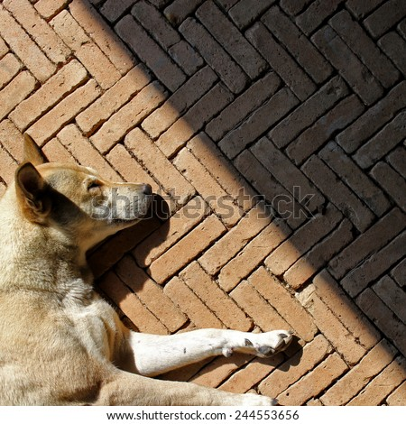 Sleeping dogs and the shadows on the brick floor