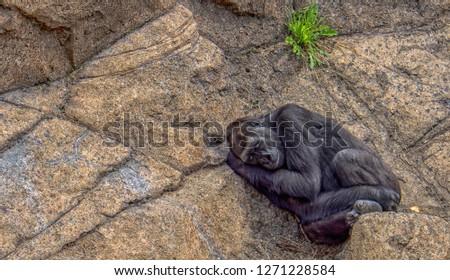Sleeping Gentle Giant #1271228584