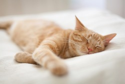 Sleeping ginger tomcat - perfect dream