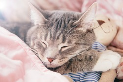 Sleeping gray cat on a pink bed with a toy