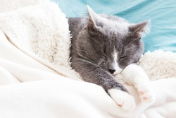 Sleeping grey cat in white blue bed.