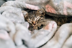 Sleeping kitten in grey soft blanket. Cute feline friend. Catnap habits and sleep training. Cozy home with pet. Cat vaccination