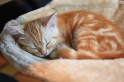 Sleeping kitten in the comfortable bed