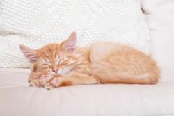 Sleeping kitten on a white pillow. Front view.