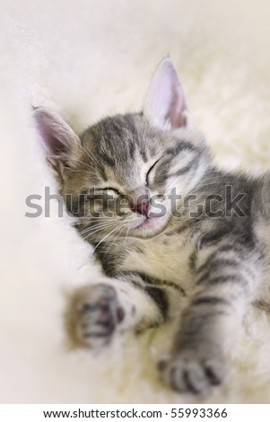 Sleeping Kitten on a white sheepskin