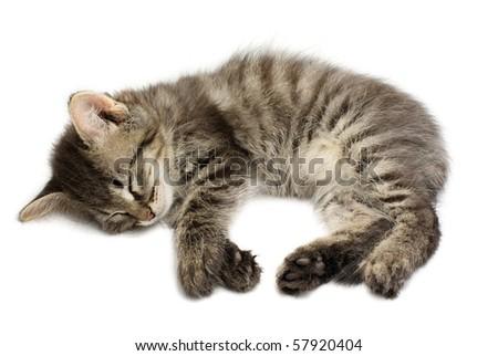Sleeping kitten on white background